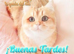 Photo of Buenas Tardes Facebook Para Whatsapp Celular