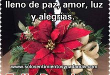 Photo of Feliz Domingo Amor Para Whatsapp