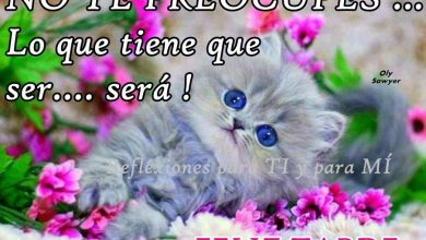 Photo of Feliz Tarde Amor Para Whatsapp Celular