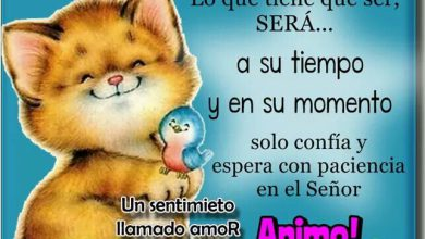 Photo of Frases Buenas Tardes Amistad Para Facebook Y Whatsapp