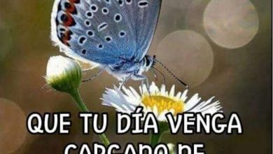 Photo of Frases De Buenos Dias Con Cariño Para Whatsapp
