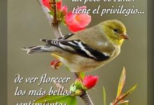 Photo of Imagenes Bellas De Buenos Dias Para Facebook