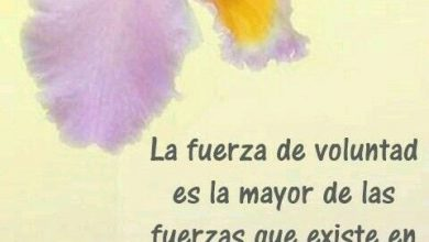Photo of Imagenes De Buenos Dias Amor Con Frases Para Whatsapp