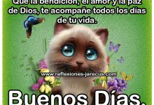 Photo of Imagenes De Feliz Domingo Para Compartir En Facebook Para Celular