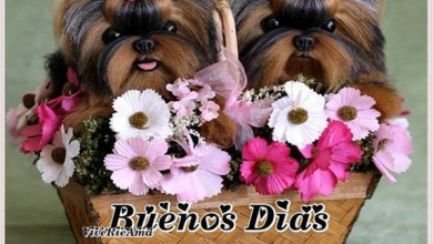 Photo of Imajenes Feliz Jueves Para Facebook