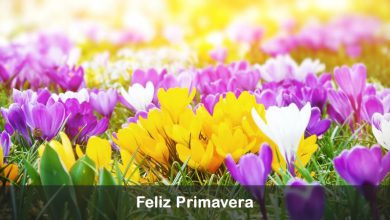 Photo of Feliz dia de la primavera