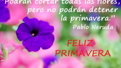 Photo of Frases feliz primavera