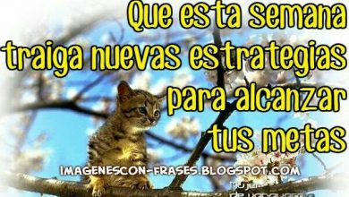 Photo of Buenos Dias Lunes Para Facebook Gratis
