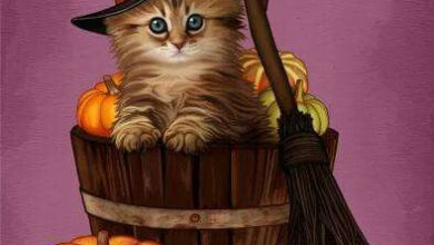 Photo of Imagenes De Muñecas De Halloween